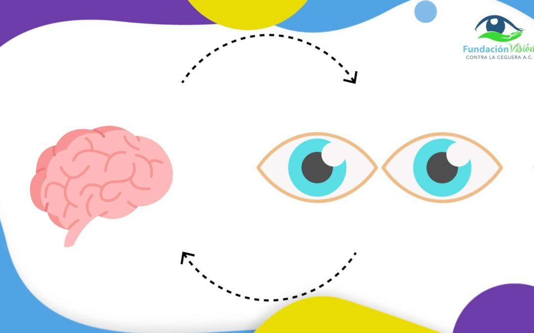 el funcionamiento de los ojos