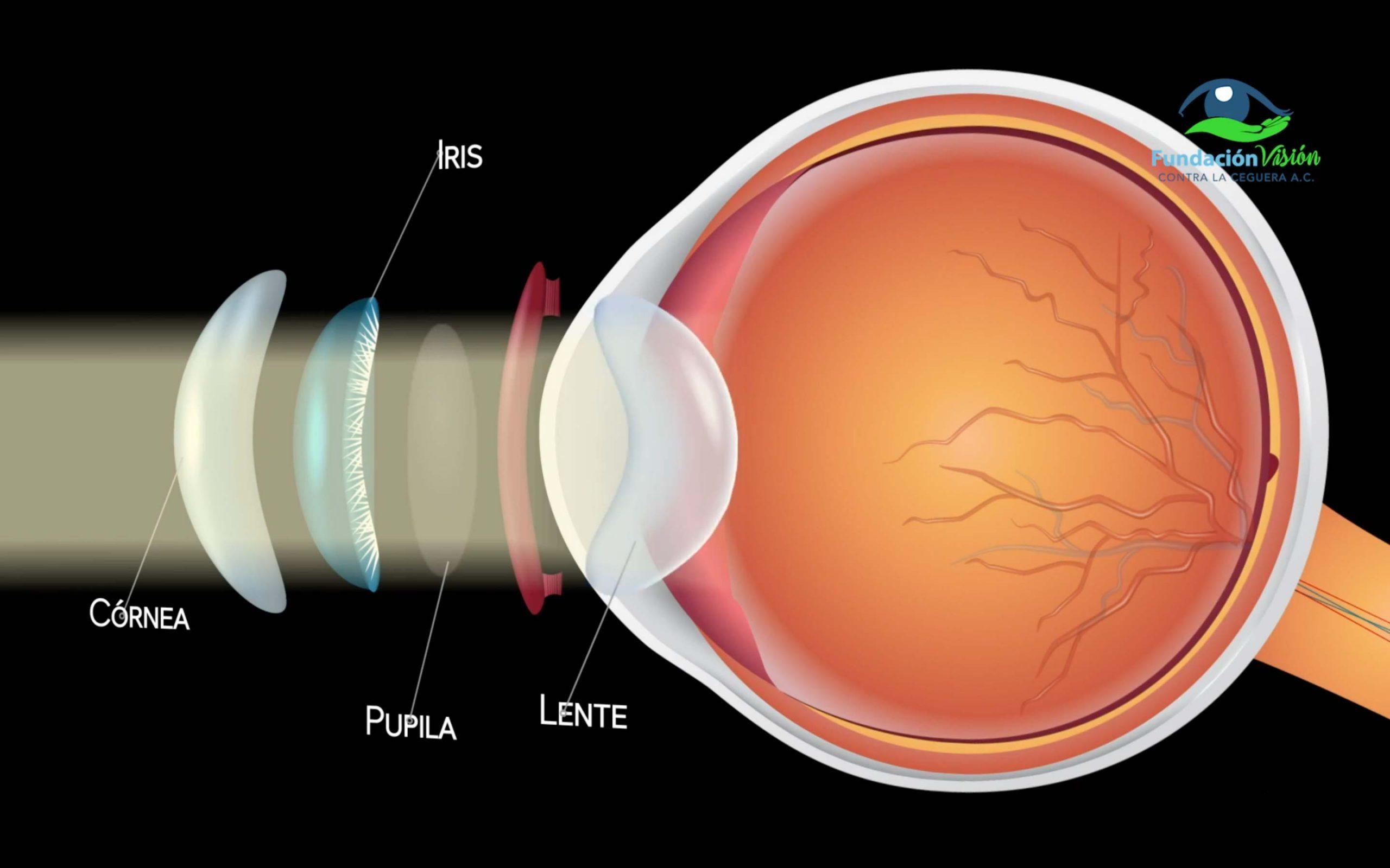 Lente curvo del ojo