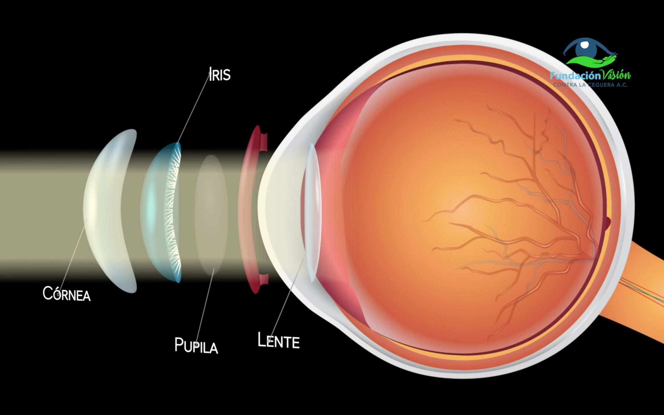 Lente plano del ojo